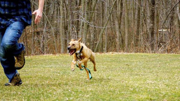 dog-chasing